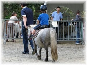 Poney rides near the gite